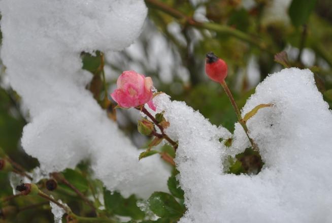 Tuyet Dec-18-2012 (126)