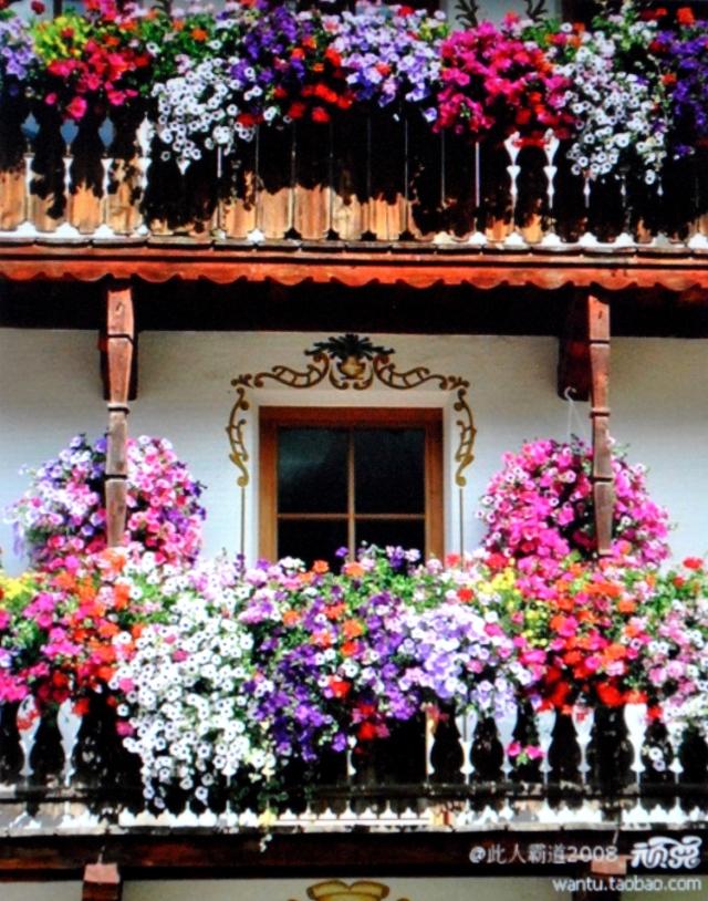 Ban công nở đầy hoa (5)