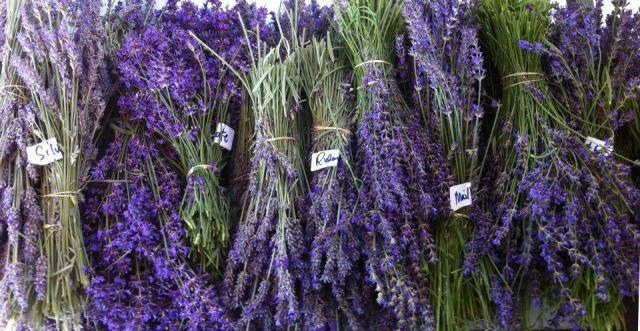 Oregon Lavender (23)