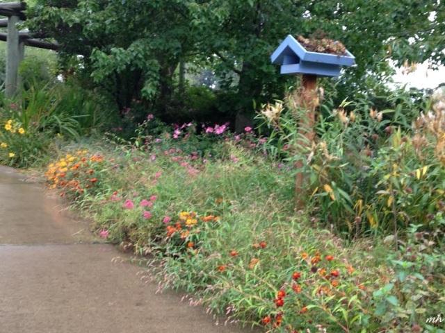 M Scholl's Garden 2014 (21)